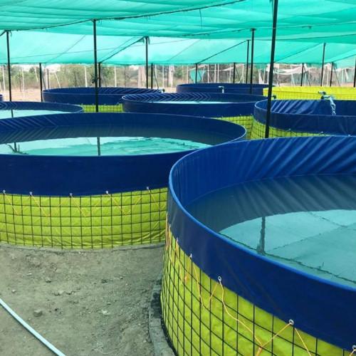 Mipatex 550 GSM PVC Biofloc Fish Tank 4m, 10000ltr - Round Tarpaulin Sheet Aquaculture Farming, with Protection Cover (Blue)