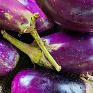 Eggplant/Began